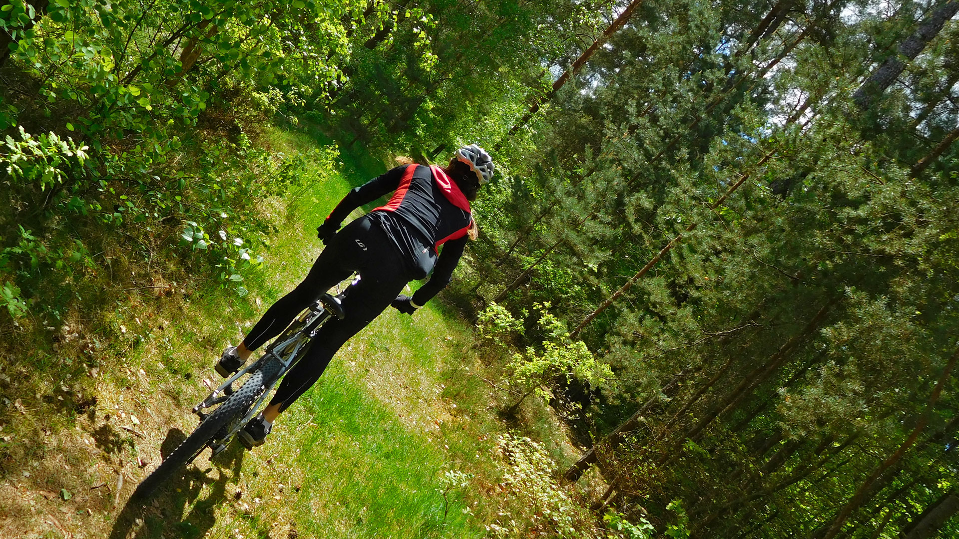 MTB Weisendorf Forest