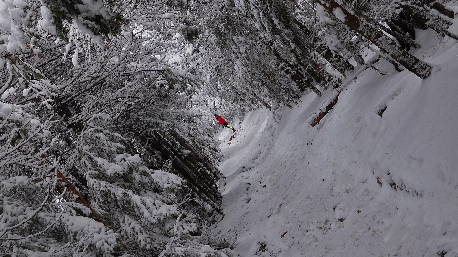 Mount Willard Trail Hiking–White Mountains-NH-USA