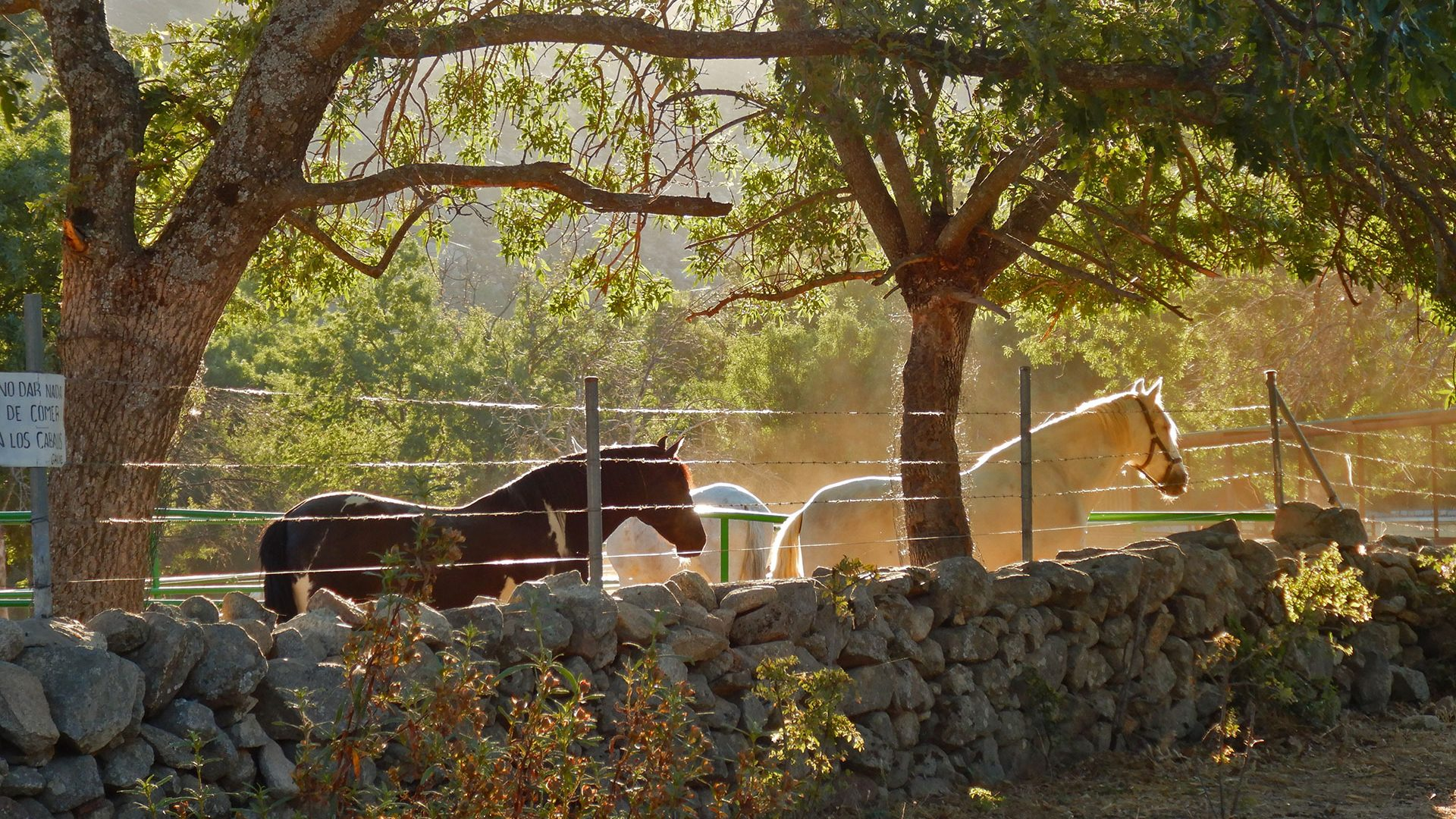 Maliciosa por la Senda d las Cabras y sus clavijas