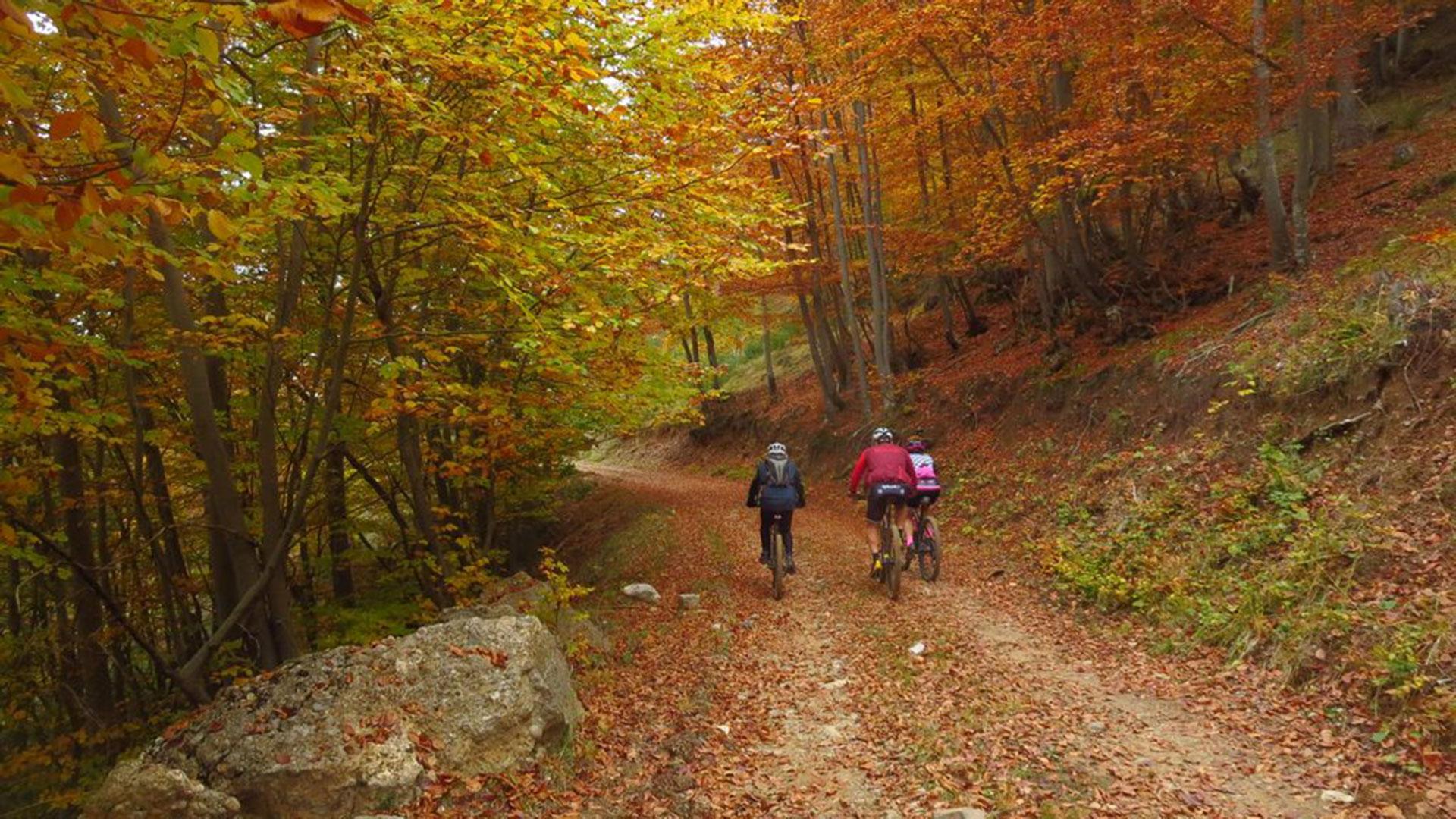 Senders de Montclús - Serra del Catllaràs
